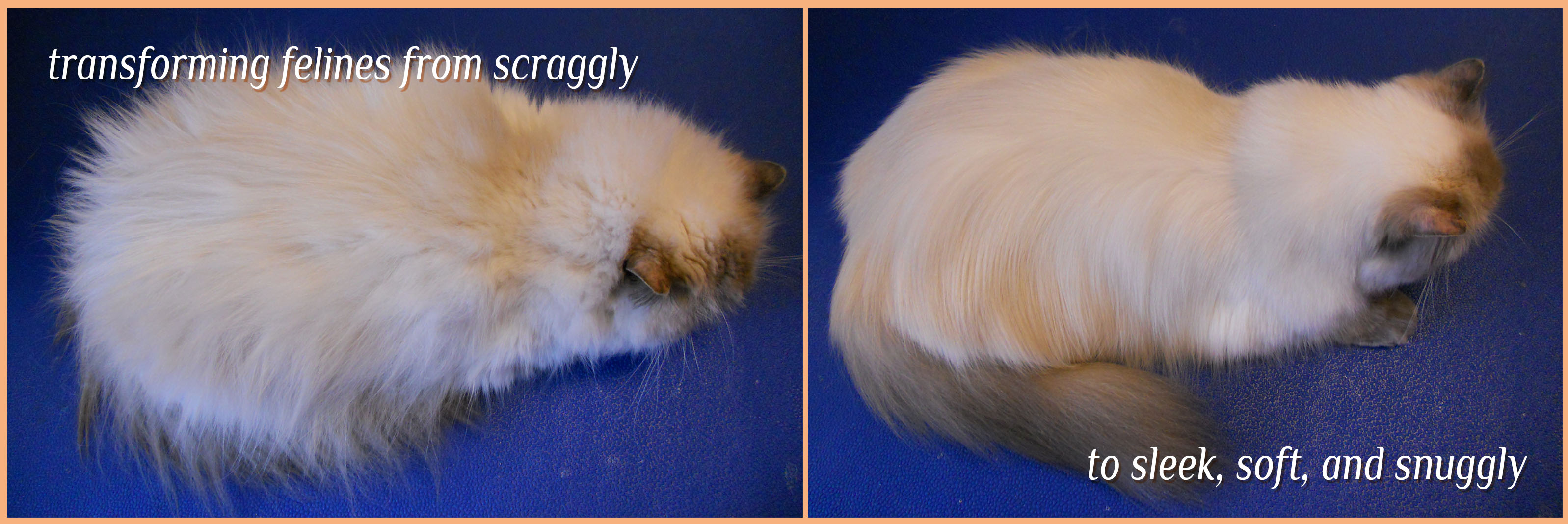 transforming felines from scraggly to sleek, soft, and snuggly