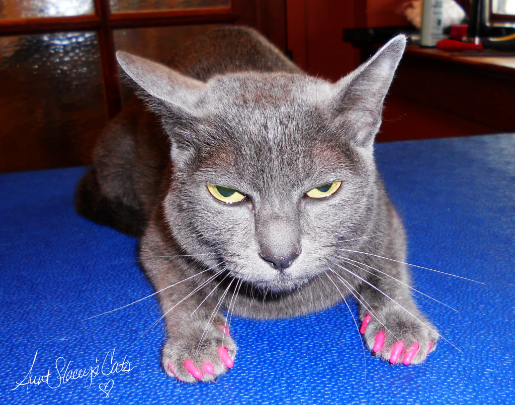 Piper wearing Soft Paws claw caps in pink